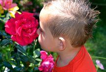 Catalogue de mes roses.