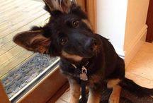 Funny Dog Stuff / Hier sammeln wir einige lustige Bilder von Vierbeinern.