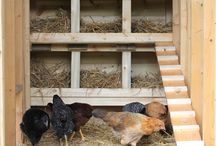 Chicken Coop... / by Amy Beaud