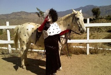 horse fancy dress costumes