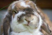 Coniglietti divertenti