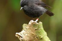 birds / by Dixie Trollinger