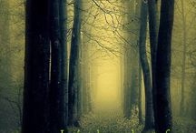 Dark Forests / Dark, creepy, and mysterious - the trees know more than they are telling...