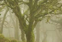 Tree Inspirations / The enchanted wood.