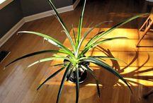 diy plant