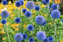 Seasonal Flowers / A comprehensive assortment of wholesale seasonal flowers available in this category. An exciting category to browse as wholesale cut flowers and foliage varieties are always changing with the seasons !