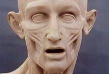 анатомия и рисунок человека