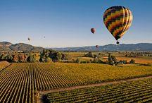 Enoturismo / Descubre la gastronomía castellana y el mundo del vino de la mano de Grupo Matarromera. Experiencias para toda la familia en la D.O Ribera del Duero, D.O. Cigales, D.O. Rueda, D.O. Toro, D.O. Rioja.