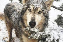 amazing wild life and animals