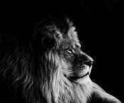 Beautiful Animals / by Debbie Ryan