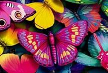 Renkler ❤️❤️❤️ / Kelebekler