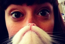 Cat & Dog Beards!