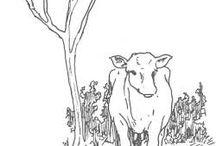 Animals - Cow / by Jennifer Holland