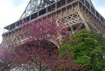 Paris / by Mary Ruiz