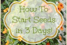 How to grow seeds in 3days