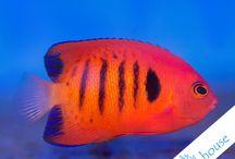 Fish - Ryby w CoralHouse Bielawa / Zdjęcia naszych pupili czyli ryb