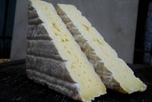 Cheese SAMPLES photoS