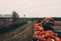HALLOWEEN | everyone hail to the pumpkin song