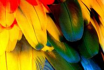 parrots and budgies