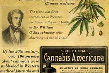 frez medisch gebruik cannabis