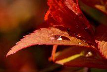 Czerwona rozkosz