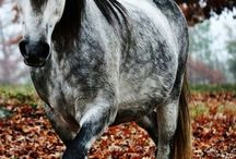 Pretty Horses / Pictures of pretty horses.