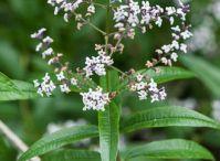 Giardino&Orto : Piante Aromatiche