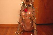 Christmas / by Caroline Adams