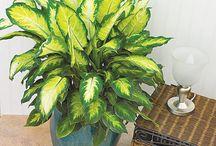 Indoor/Shade loving plants