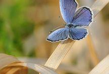 Butterflies / Mariposas
