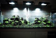 aquarium design / Acquari esclusivi per i tuoi interni , allestimenti naturali unici realizzati da Diego Marinelli