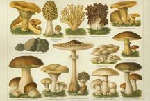 Mushroom and Plant Information / by Time2be Healthy