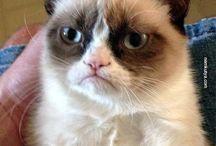 Grumpy cat <3 :D
