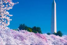 Washington D.C. / Places to visit in our once in a lifetime memorable family trip O.S!