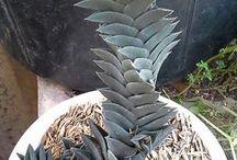 Sansevieria & Succulent Plant