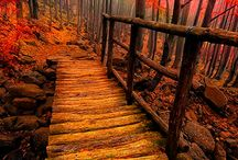 !**!  AUTUMN : RUST & YELLOW  LEAF'S / Autumn every thing Yellow Rust and Brown / by Gillian Haberfield