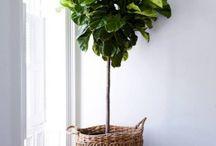 Plants in interiors