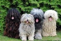 Kutyák-Dog