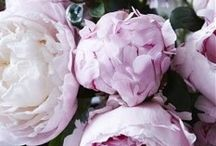 Цветы, флористика