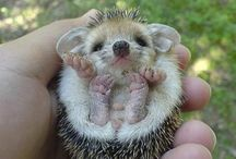 awwww / From cute animals to stories that restore your faith in humanity / by Leah Arrington