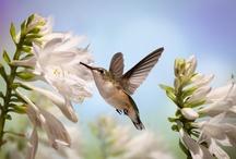 Earthly Goods Wild Bird Photography