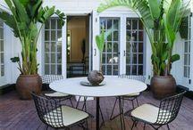 House&Garden plants