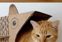 kittens need toys!