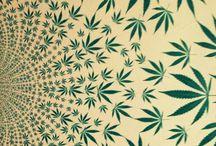 LindoS4/20 / 25/07/2k16 progetto in Italia X l'uso modico di cannabis Che è stato una buffonata