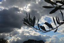 Sunday / nature