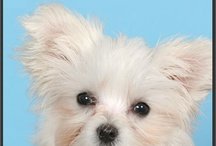 Cachorros / Cachorros disponibles en nuestras tiendas