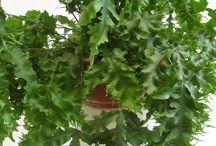 папоротники fern