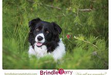 Pet Photos / Animal Pictures!