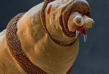 Microskopic life