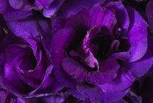 Beth & Marcus / May 2014 - Classic, stylish, elegant. Cadbury's purples, lilacs, lavenders and creams